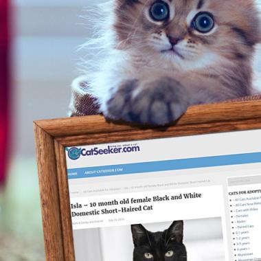 CatSeeker.com
