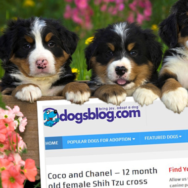 dogsblog.com